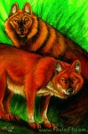 Endangered Ark - Dholes
