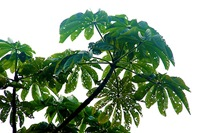 rainforest_plant