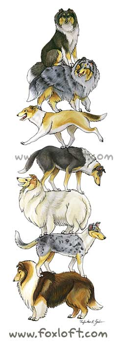 Collie Stack