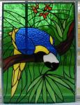 Macaw Window