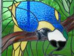 Macaw Window Closeup