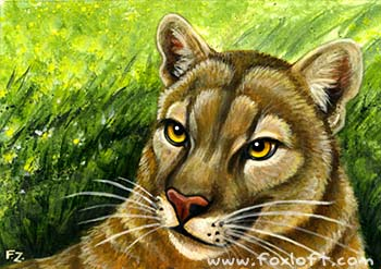 Cats of North America: Cougar